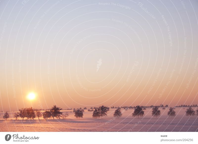 Vorstellung Sonne Umwelt Natur Landschaft Urelemente Himmel Wolkenloser Himmel Horizont Winter Klima Schönes Wetter Nebel Schnee Baum Feld ästhetisch