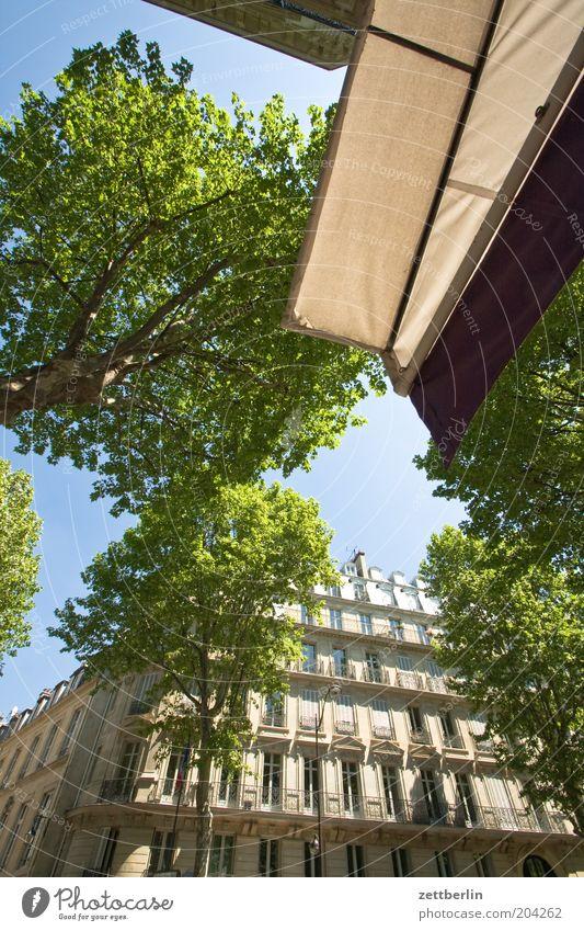 Bd St-Germain Frankreich Paris Hauptstadt Allee Haus Fassade Fenster Fensterfront Architektur Stadt Markise Café Straßencafé Baum Blatt Sommer