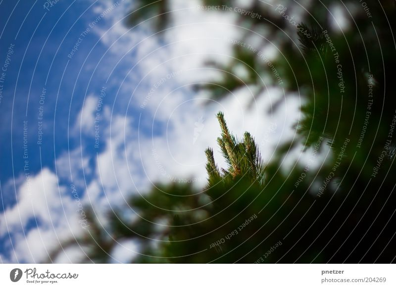 Spitzenmäßig! Natur schön Himmel Baum grün blau Pflanze Sommer Wolken Frühling Wärme Landschaft Zufriedenheit Wetter Umwelt Klima