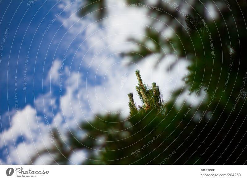 Spitzenmäßig! Umwelt Natur Landschaft Himmel Wolken Frühling Sommer Klima Klimawandel Wetter Schönes Wetter Pflanze Baum Gipfel schön Wärme blau grün