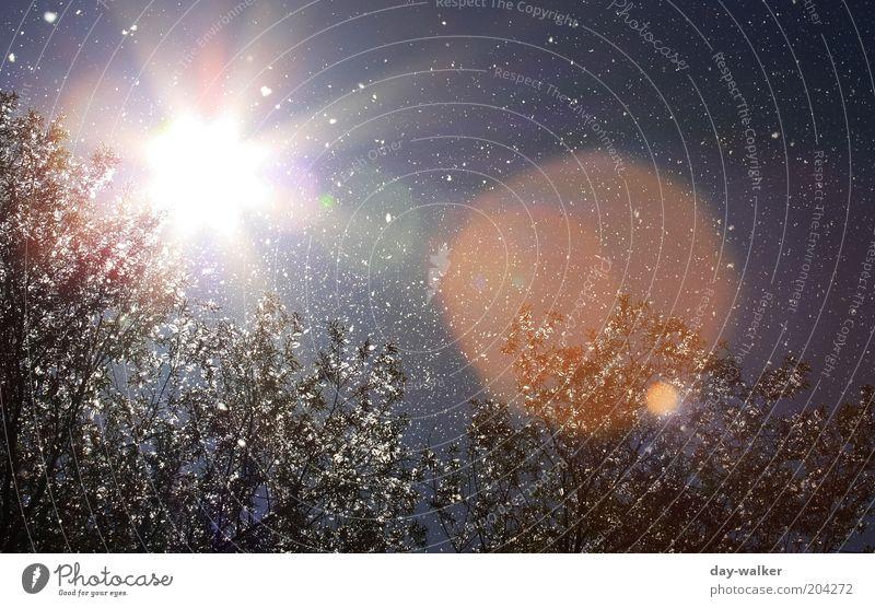 Pollenflug III (Sie fliegen immer noch) Himmel Natur blau weiß grün Baum rot Pflanze Sonne Frühling Luft Wind Schönes Wetter Blendenfleck Gegenlicht