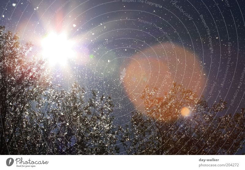 Pollenflug III (Sie fliegen immer noch) Natur Pflanze Luft Himmel Sonne Frühling Schönes Wetter Wind Baum blau grün rot weiß Sonnenfleck Farbfoto mehrfarbig Tag