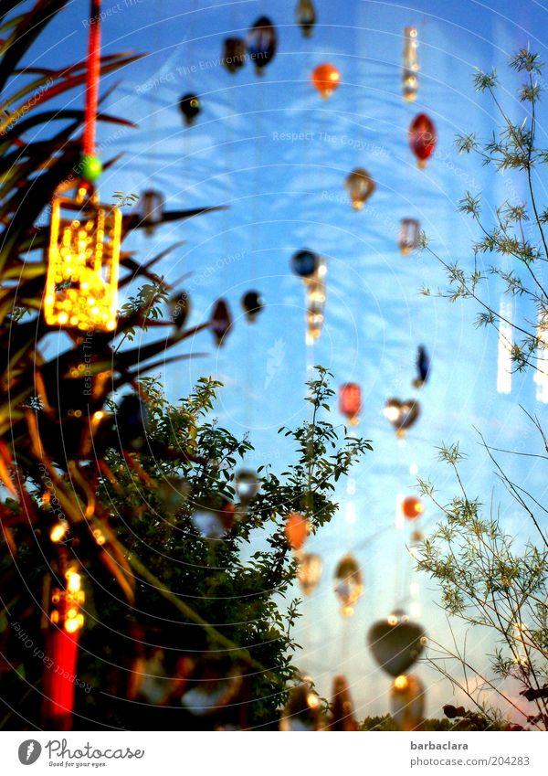 glänzende Aussicht schön Farbe Pflanze Fenster Glück Feste & Feiern Metall Dekoration & Verzierung ästhetisch Kitsch hängen Perle Valentinstag Reflexion & Spiegelung Zimmerpflanze mehrfarbig