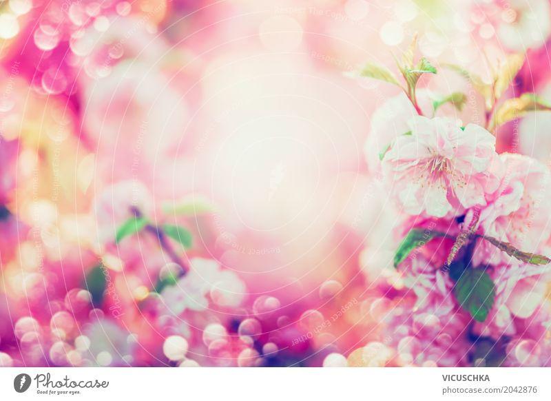 Schöne Sommer Blüten Lifestyle Design Garten Natur Pflanze Frühling Blume Blatt Park Blühend weich gelb rosa Hintergrundbild Rahmen Unschärfe schön Farbfoto