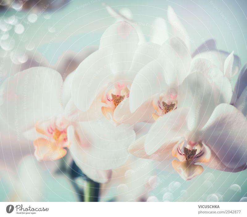Weiße Orchideen elegant Design Natur Pflanze Blume Blüte Blumenstrauß Blühend Orchideenblüte Nahaufnahme weiß Farbfoto Makroaufnahme