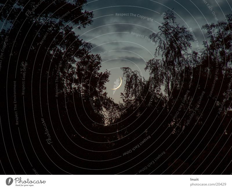 Mondsichel Abenddämmerung Baum Nacht Sichelmond Silhouette Textfreiraum links Textfreiraum unten
