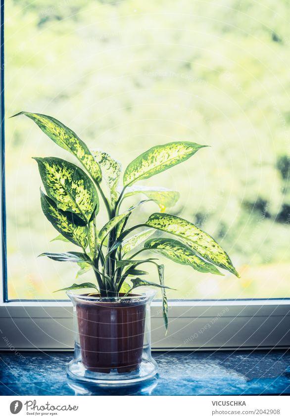 Dieffenbachia Grünpflanze im Topf auf Fensterbrett Natur Pflanze grün Haus gelb Innenarchitektur Stil Design Wohnung Häusliches Leben Freizeit & Hobby