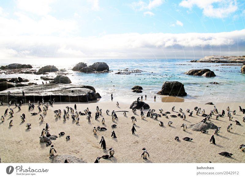 ringelrein | pinguintanz Himmel Ferien & Urlaub & Reisen schön Meer Wolken Ferne Strand Küste außergewöhnlich Freiheit Stein Tourismus Schwimmen & Baden Felsen wild träumen