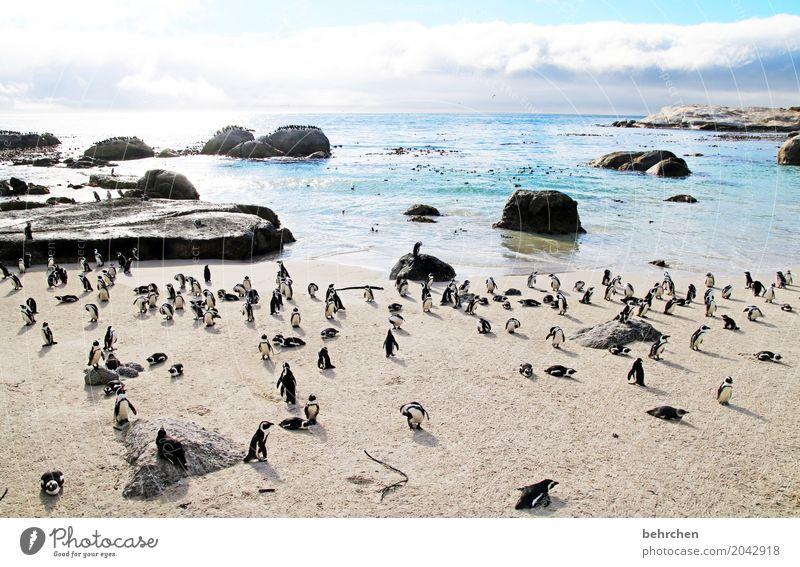 erhöhtes RISIKO, in pinguinkacke zu treten;) Himmel Natur Ferien & Urlaub & Reisen schön Landschaft Meer Wolken Ferne Strand Küste außergewöhnlich Freiheit
