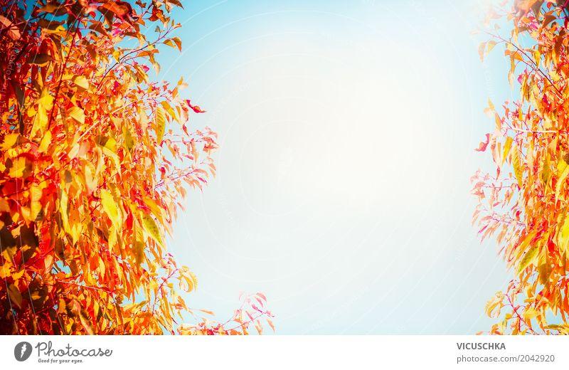 Herbs Natur Hintergrund mit schönem Laub und Himmel Lifestyle Design Sommer Landschaft Herbst Pflanze Baum Sträucher Blatt Garten Park gelb Hintergrundbild