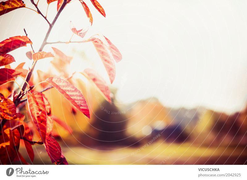 Herbst Hintergrund mit schönen roten Baumblättern Design Garten Natur Sonnenlicht Schönes Wetter Pflanze Sträucher Blatt Park weich gelb Hintergrundbild