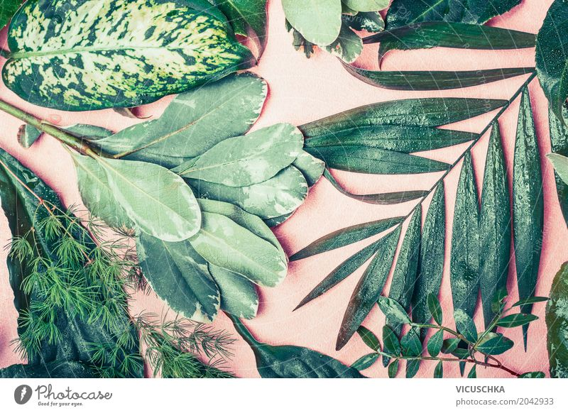 Verschiedene grüne Blätter Natur Pflanze Sommer Blatt Lifestyle Frühling Stil Design rosa Urwald Grünpflanze Ornament tropisch Hipster Composing