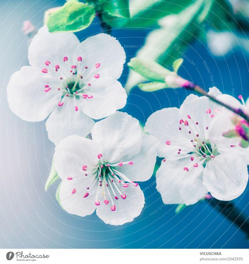 Nahaufnahme von hübschen Blüten Natur Pflanze blau Sommer weiß Blume Blatt Frühling Stil Garten Design rosa Park Schönes Wetter Blühend