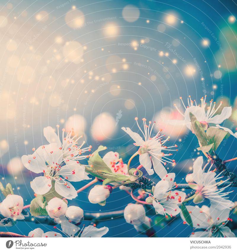Frühling Natur Hintergrund mit weiße Blüten Stil Design Sommer Pflanze Blume Blatt Blühend blau rosa türkis Gefühle Stimmung Freude Frühlingsgefühle Liebe