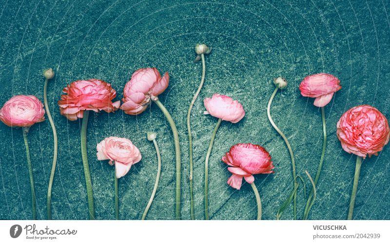 Rosa Blumen Reihe auf türkis dunklem Hintergrund Stil Design Sommer Dekoration & Verzierung Feste & Feiern Valentinstag Muttertag Hochzeit Geburtstag Natur