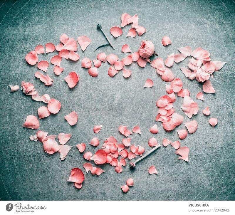 Rosa Pastell Blütenblätter von Blumen , Rahmen Natur Pflanze Sommer Blatt Leben Lifestyle Liebe Hintergrundbild Stil Feste & Feiern Design rosa elegant