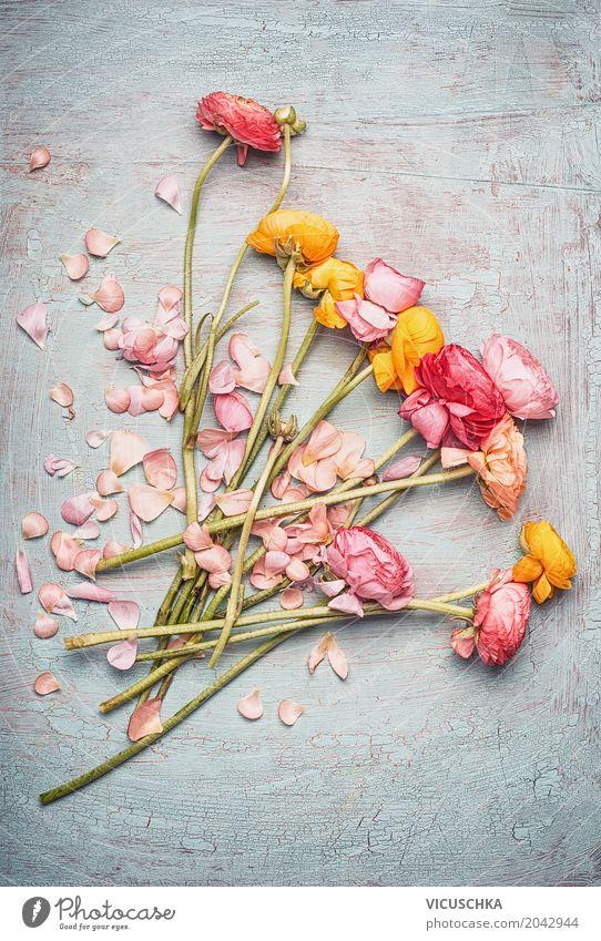 Schöner Blumenstrauß mit bunten Ranunkel Natur Sommer Blatt Blüte Frühling Liebe Stil Feste & Feiern Design rosa Dekoration & Verzierung retro Geburtstag