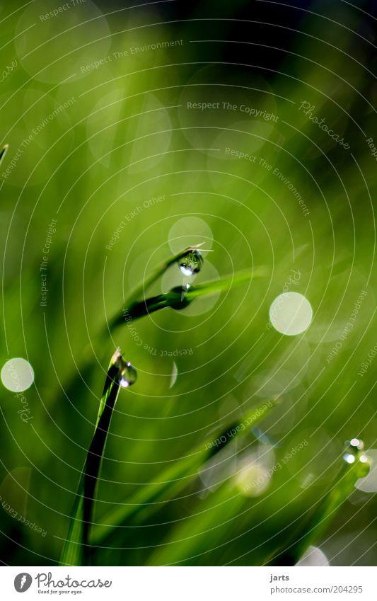 ..verschwommen.. Umwelt Natur Wassertropfen Frühling Sommer Schönes Wetter Pflanze Gras Grünpflanze Wiese frisch schön nass natürlich grün ruhig