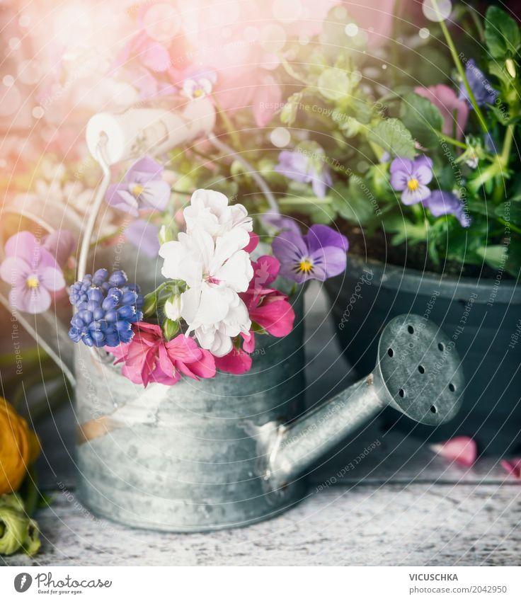 Gießkanne mit Pflanzen und Blumen auf Gartentisch Stil Design Freizeit & Hobby Sommer Dekoration & Verzierung Natur Frühling Blatt Blüte Blumenstrauß gelb