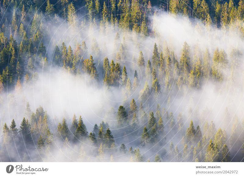 Majestät der Natur, nebelhafter Koniferenwald bei Sonnenaufgang Design schön Ferien & Urlaub & Reisen Sommer Berge u. Gebirge Dekoration & Verzierung Tapete