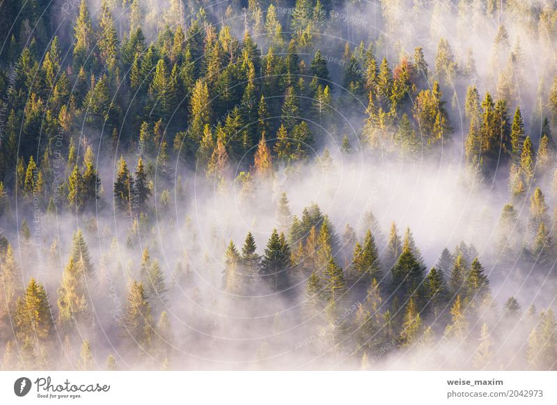 Nadelwald im Nebel, Misty Pine Woodland Natur Ferien & Urlaub & Reisen Pflanze Sommer grün weiß Baum Landschaft Wolken Ferne Wald Berge u. Gebirge Frühling