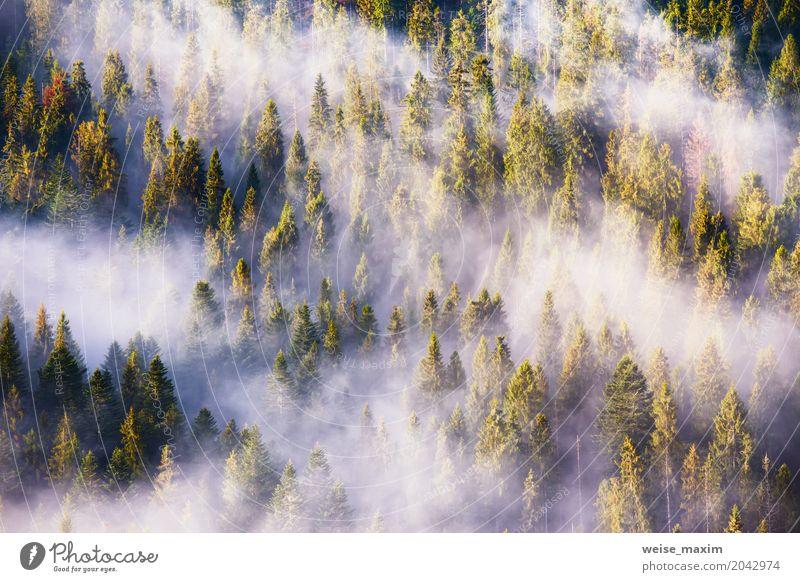 Landschaft mit schönem Nebel im Koniferenwald Natur Ferien & Urlaub & Reisen Pflanze Sommer grün weiß Baum Wolken Wald Berge u. Gebirge Frühling natürlich