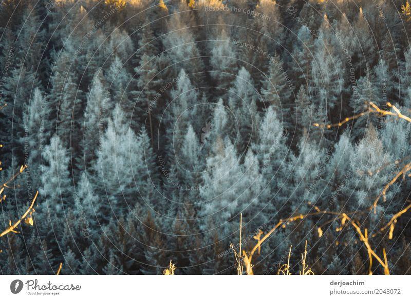 Eiskalt sehen die oben  gefrorene Bäume aus mit etwas Sonnenschein. harmonisch Ausflug Winter Natur Schönes Wetter Baum Wald Bayern Deutschland Menschenleer