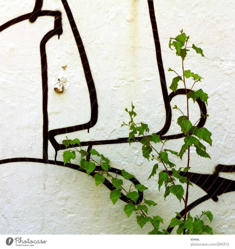 Wenn Du weitere Infos benötigst ... Natur grün Baum Pflanze Blatt schwarz Farbe Wand Graffiti Linie Sträucher Kultur Zeichen Putz Zeichnung frontal