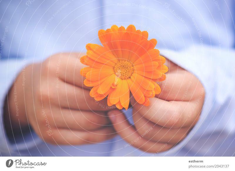 Kinderhände mit einer Blume Lifestyle Valentinstag Muttertag Junge Kindheit Hand Finger 1 Mensch 3-8 Jahre Pflanze Hemd klein blau Lebensfreude Warmherzigkeit