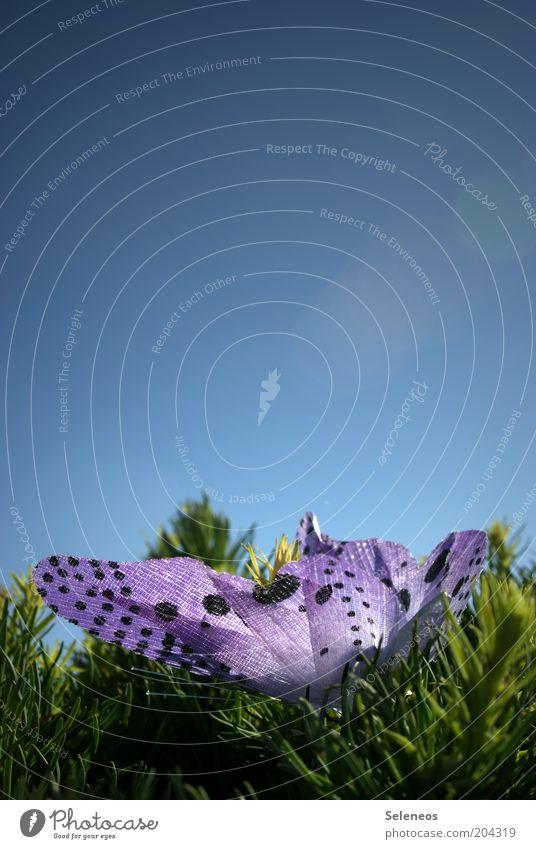 flutterby Natur Himmel Pflanze Sommer Tier Frühling Umwelt Sträucher Dekoration & Verzierung Schmetterling Kunststoff Schönes Wetter Grünpflanze gepunktet Wolkenloser Himmel