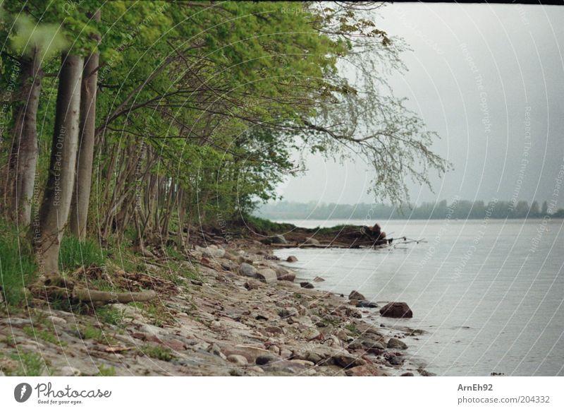 steinig Natur Pflanze Wasser Himmel Wolken Baum Gras Strand Ostsee braun grau grün Farbfoto Außenaufnahme Menschenleer Tag bedeckt