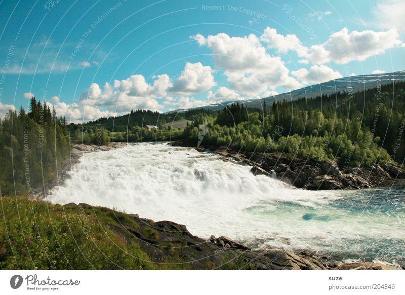 Lachswanderung Ferien & Urlaub & Reisen Berge u. Gebirge Umwelt Natur Landschaft Wasser Himmel Wolken Sommer Schönes Wetter Wiese Wald Wasserfall
