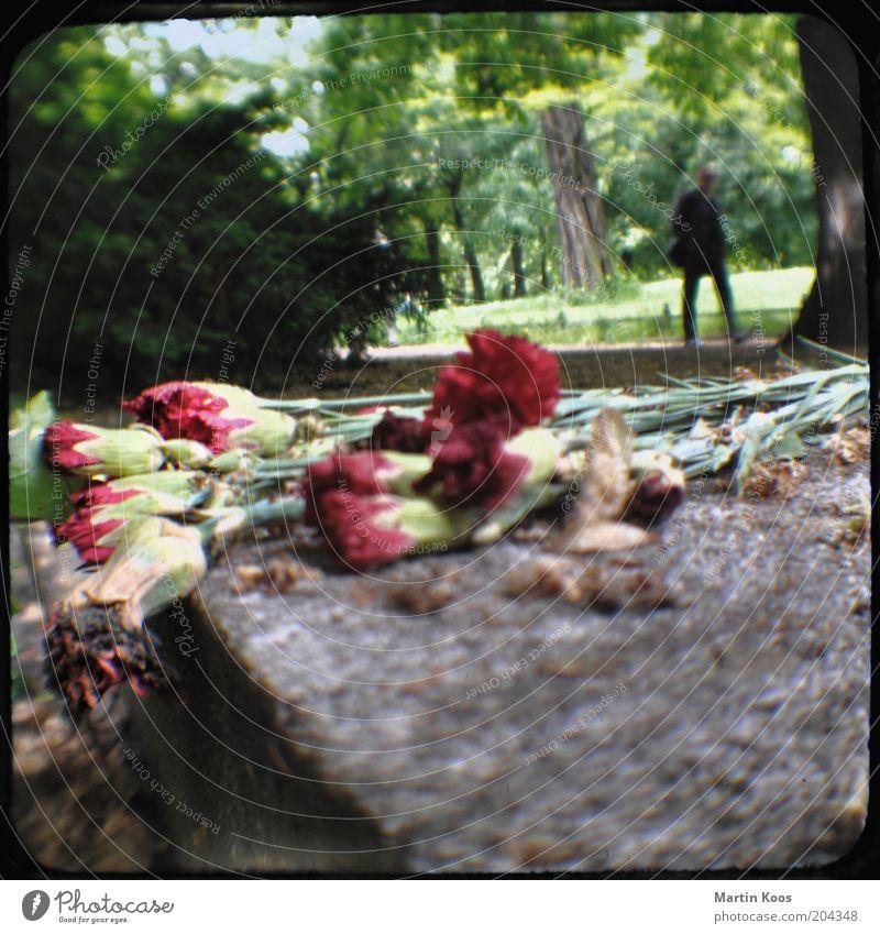 Lichtenberg Mensch Baum Blume Erwachsene Berlin Traurigkeit Park gehen liegen maskulin historisch Blumenstrauß Denkmal Friedhof welk erinnern
