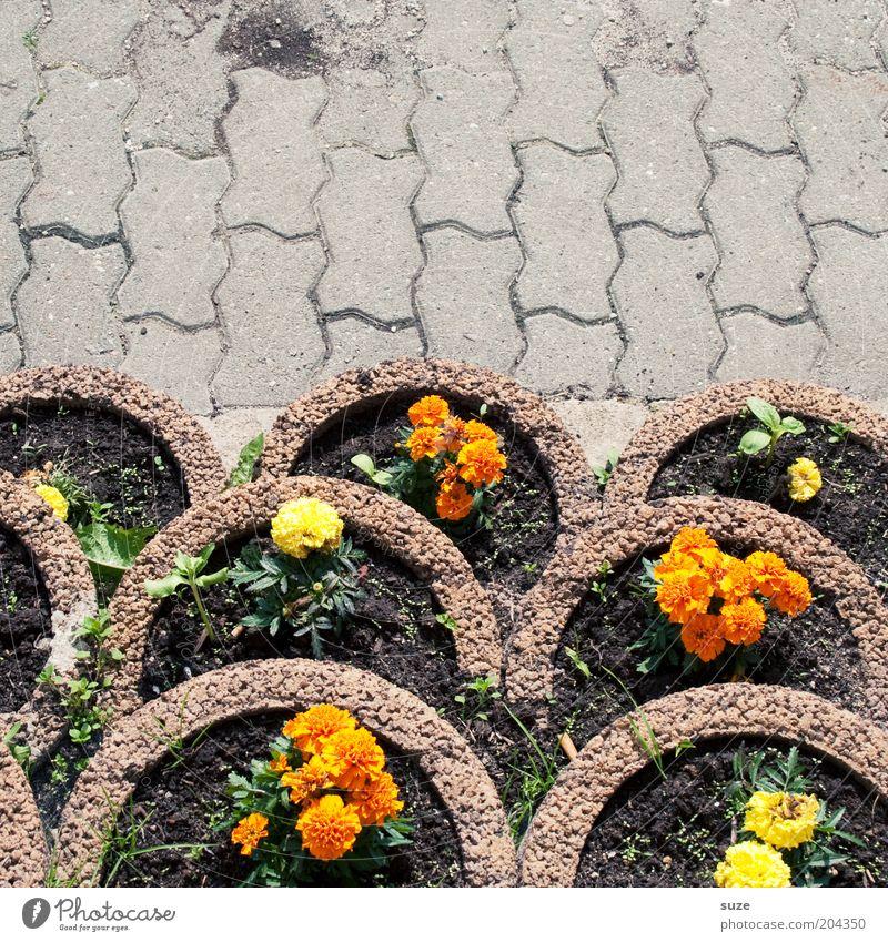 Balkonien Blume Pflanze Blüte Garten Stein Wege & Pfade Beton Ordnung Wachstum Platz einfach Dekoration & Verzierung Blühend Terrasse Am Rand