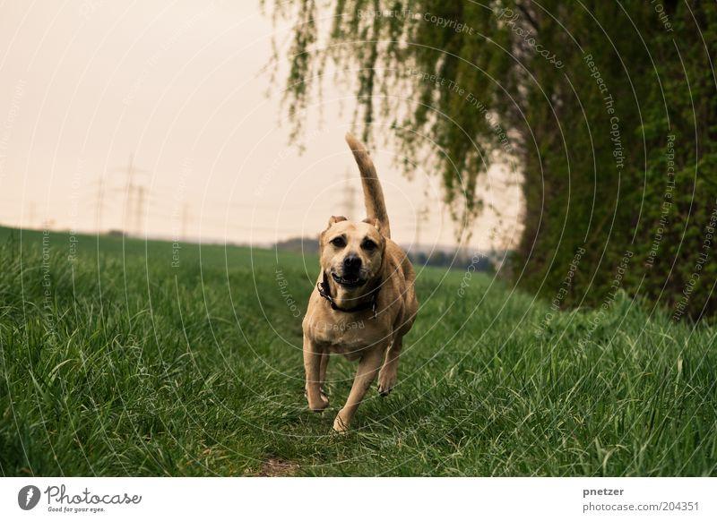 Tip: 3:0 Umwelt Natur Landschaft Himmel Frühling Sommer Wetter Schönes Wetter Pflanze Baum Gras Wiese Feld Tier Hund 1 laufen rennen sportlich Fröhlichkeit