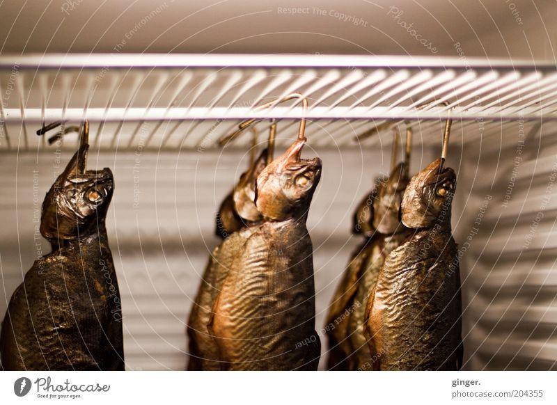 Räucherfisch im Ausverkauf Fisch Ernährung lecker braun gold Räucherforelle hängen kühlen Kühlschrank Haken Rost Fischkopf frisch geräuchert Fischereiwirtschaft