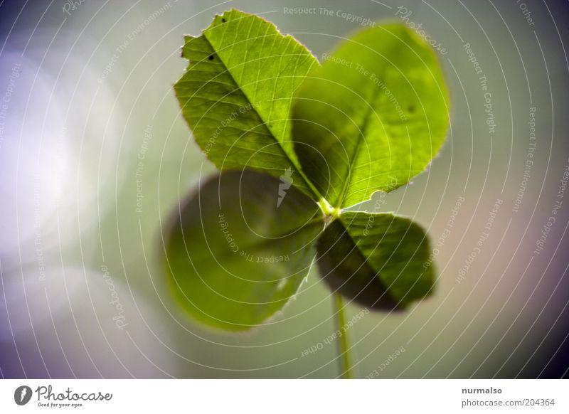da Wünsche ich jetzt mal Glück ! Natur schön Pflanze Gefühle Gras Umwelt Hoffnung natürlich Zeichen entdecken Schönes Wetter nachhaltig Klee Kleeblatt
