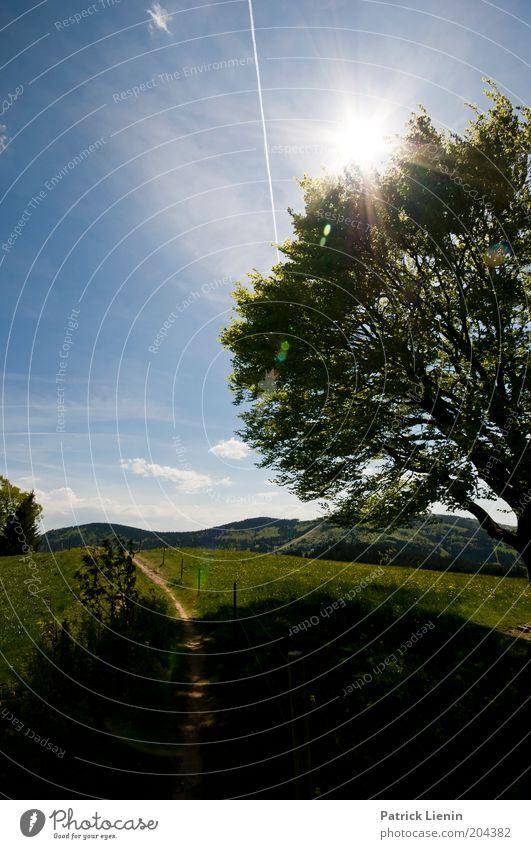 sunny afternoon Umwelt Natur Landschaft Pflanze Himmel Wolken Sonne Sommer Klima Baum Park Hügel Berge u. Gebirge Wiese Wege & Pfade schön beschaulich leuchten