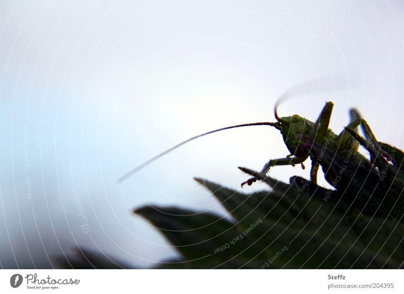 Heuschrecke Natur Blatt Tier dunkel Umwelt beobachten Lebewesen Insekt verstecken Fressen Fühler Tarnung Heuschrecke Makroaufnahme gefräßig dunkelgrün