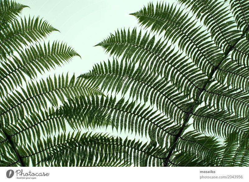 Grafiken und Texturen - Tropisches Gefühl elegant Stil Design exotisch Freude Gesundheit Wellness Leben harmonisch Wohlgefühl Erholung ruhig Spa Kunst Umwelt
