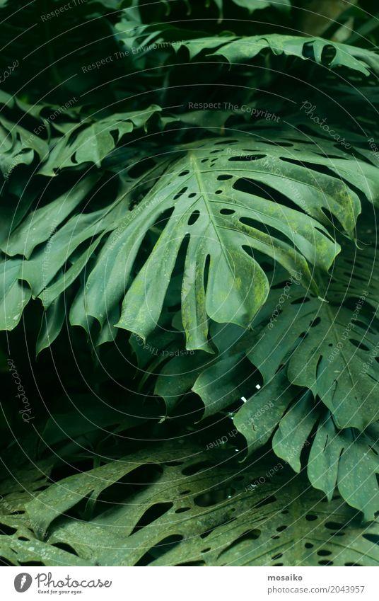 Grafiken und Texturen - Tropisches Gefühl Natur Pflanze grün Erholung Freude Umwelt Leben Gesundheit Stil Kunst Garten Design elegant Wellness Wohlgefühl