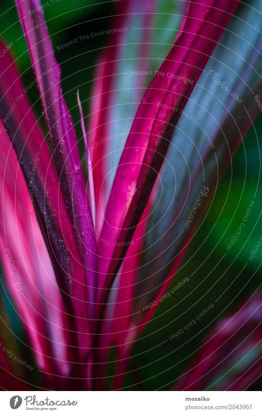 Oberfläche von rosa Blättern - tropisches Gefühl Lifestyle Reichtum elegant Stil Design exotisch Freude Wellness Leben harmonisch Wohlgefühl Sinnesorgane