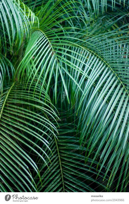 Grafiken und Texturen - Tropisches Gefühl - Palm Leaf Natur Ferien & Urlaub & Reisen Pflanze Sommer schön Baum Freude Umwelt Lifestyle Gesundheit Stil Kunst