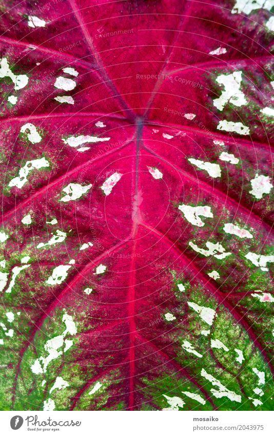 Texturen von tropischen Pflanzen Natur Sommer grün Umwelt Lifestyle Gefühle Stil Mode Design rosa elegant Fröhlichkeit einzigartig Lebensfreude graphisch