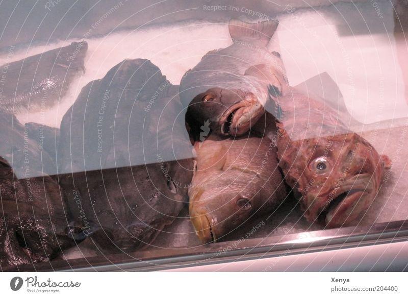 Liegst du öfters hier? Fisch Totes Tier verkaufen schleimig grau rosa weiß bizarr Fische auf Eis Gedeckte Farben Fischmarkt Theke Fischkopf Fischauge Fischmaul