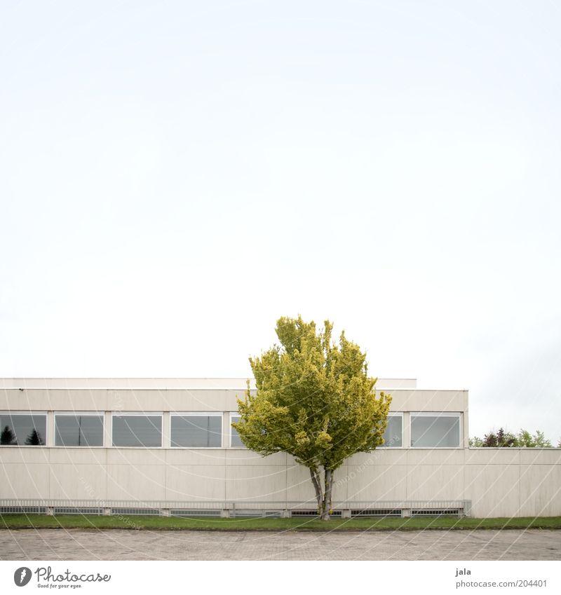 baum & beton Dienstleistungsgewerbe Unternehmen Himmel Baum Haus Bauwerk Gebäude Architektur Fassade Fenster blau grau grün puristisch Flachdach Farbfoto