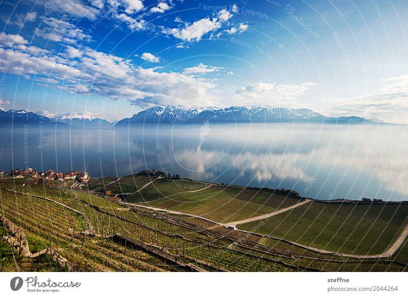 Natur IV Berge u. Gebirge Seeufer Unendlichkeit Lausanne Schweiz Alpen Genfer See Lac Lèmon Weinberg Weitwinkel Panorama (Aussicht) Gebirgssee Farbfoto