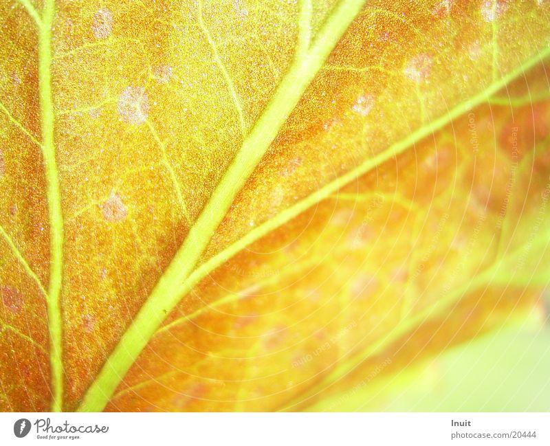 Blatt 03 Pflanze Gehirn u. Nerven Gefäße