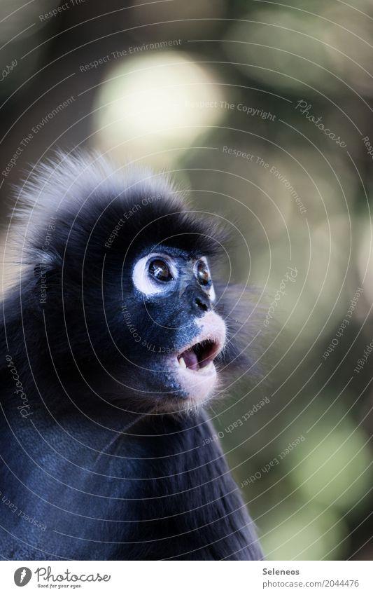 Wochenende vorbei? Echt jetzt? Ferien & Urlaub & Reisen Sommer Tier Ferne Wald außergewöhnlich Freiheit Tourismus Wildtier Abenteuer Überraschung Tiergesicht