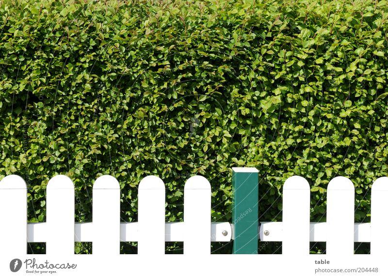 alle Latten am Zaun Lifestyle Häusliches Leben Garten Umwelt Natur Pflanze Frühling Sommer Schönes Wetter Sträucher Grünpflanze Holz Metall stehen Wachstum